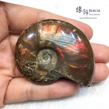 招財彩螺(斑彩螺)化石 29.3x24.8x8.5mm